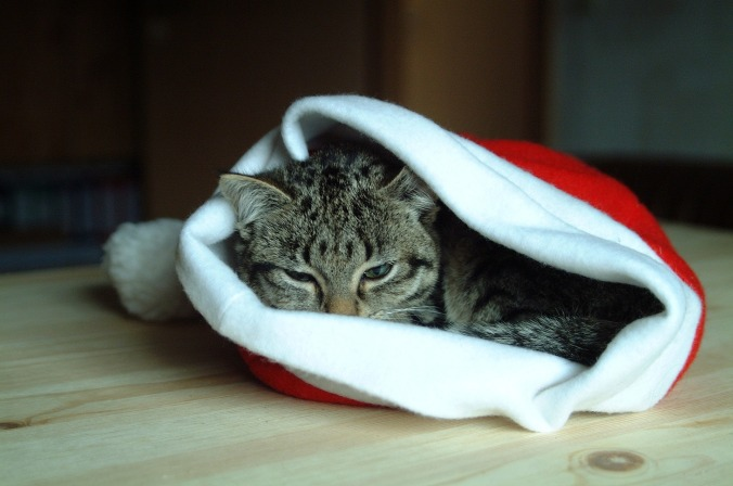 Christmas Cat [via Pixabay/mail110]
