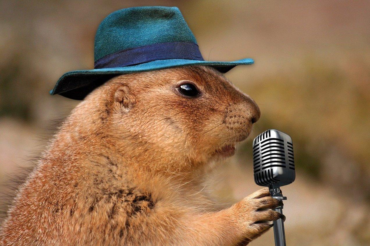 Prairie Dog as Van Morrison