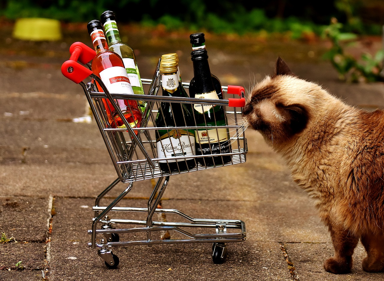 Shopping Cart & Grumpy Cat